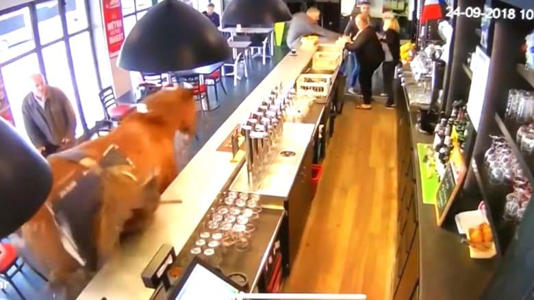 فجأة.. حصان هائج يقتحم حانة مكتظة بالزبائن