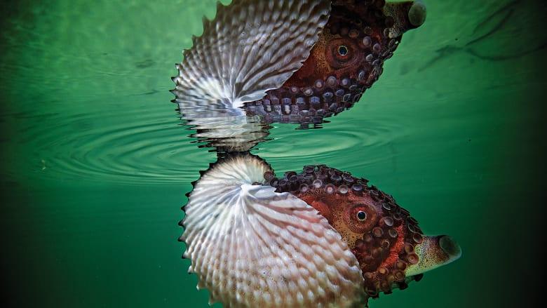 غواص يكشف أسرار أعماق المحيط الأطلنطي.. ماذا وجد؟