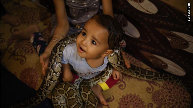 بقلوب جريئة.. كيف يعيش هذا الرجل وأطفاله مع الثعابين في مصر؟