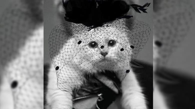 قطة لاغرفيلد المدللة بوشاح أسود وهذه تعليقات المغردين عن ورثتها