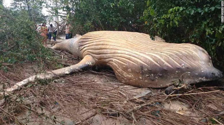 كيف انتهى المطاف بهذا الحوت النافق في غابة برازيلية؟
