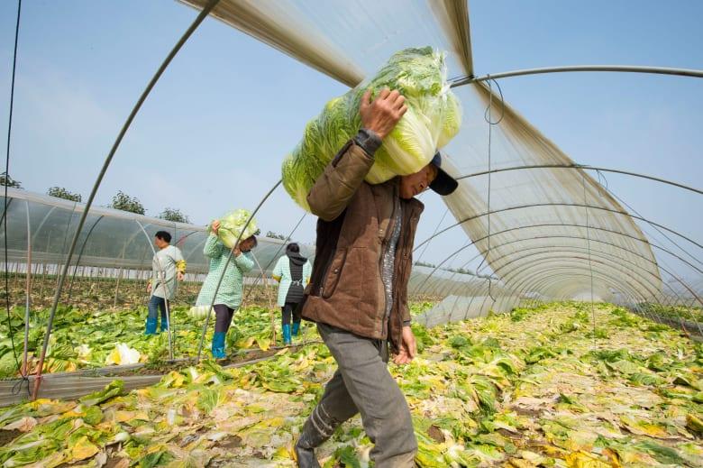 """كيف ستغير تكنولوجيا """"5G""""مستقبل الزراعة حول العالم؟"""