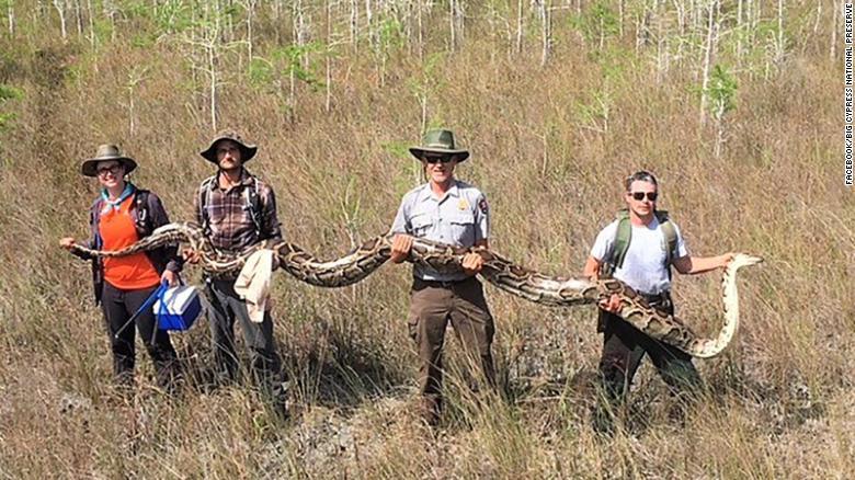 بطول أكثر من 5 أمتار..علماء يلتقطون ثعباناً قد يكون الأكبر في العالم