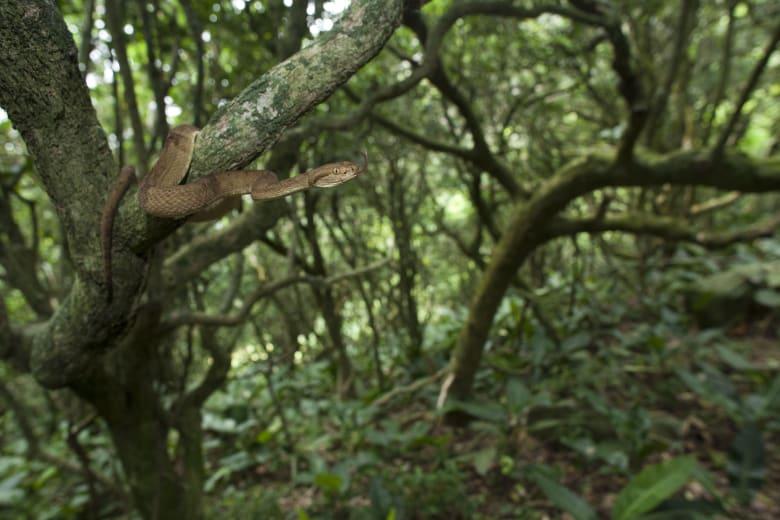 جزيرة الثعابين