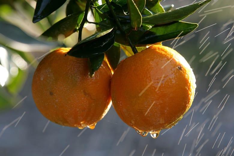 الخضار والفاكهة المجمدة قد تكون أفضل من الطازجة..إليك الأسباب