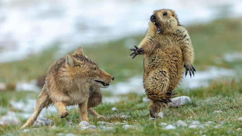 منها مضحكة وأخرى مبهرة.. ألقي نظرة إلى صور الحيوانات
