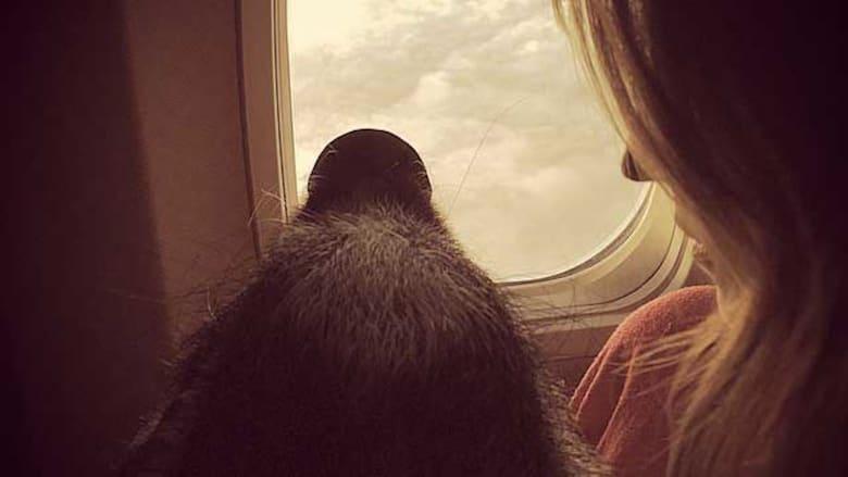 هل يجب السماح بحيوانات الدعم العاطفي في الطائرات؟