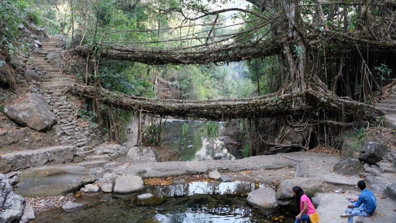 الجسور الحية.. قد لا تكون الأطول أو الأضخم ولكن ما سر قوتها؟