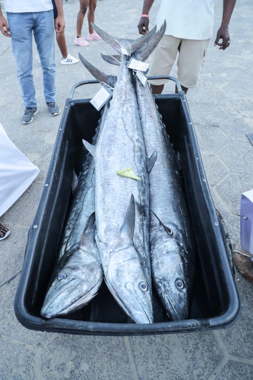 """بيع سمكة الكنعد """"الأغلى"""" في العالم بمزاد في الإمارات.. كم بلغ سعرها؟"""