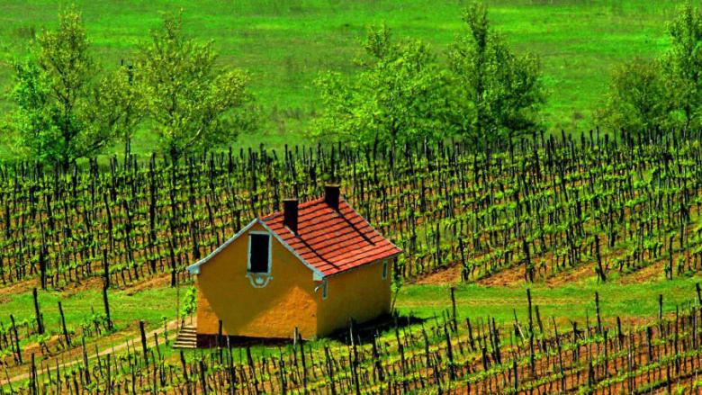 """كيف أنتجت هنغاريا """"أغلى نبيذ في العالم""""؟"""