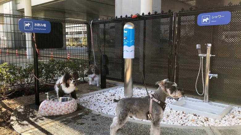 هل رفيقك بالسفر هو كلبك؟ افتتاح أول حمام للكلاب في مطار باليابان قريباً