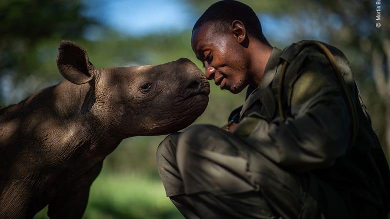 لقطة خاصة لصغير وحيد القرن مع حارسه في كينيا