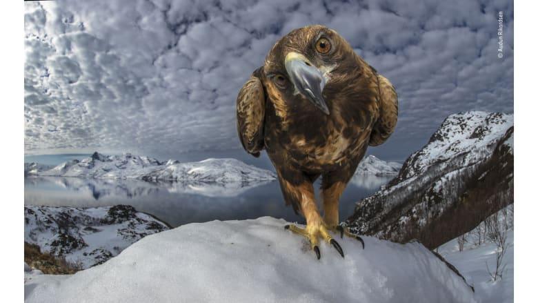 جائزة تصوير الحياة البرية