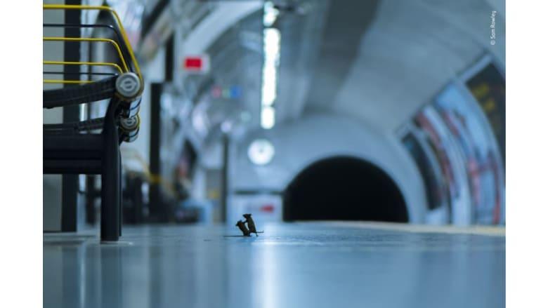 """لقطة """"شجار المحطة"""" للمصور سام رولي"""