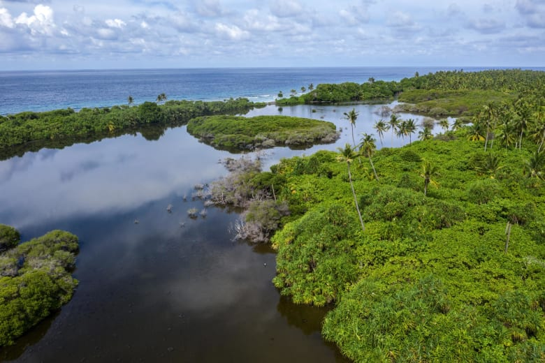 """""""عالم منسيّ"""".. تعرف إلى الأراضي التي تختفي بمعدل أسرع من الغابات"""