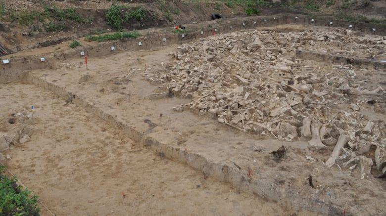 اكتشاف هيكل غامض من مئات عظام الماموث يعود للعصر الجليدي الغامض في روسيا