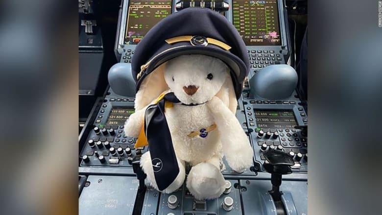 أرنب الفصح يسافر وحيداً على متن طائرة لنقل المسافرين الألمان من نيوزيلندا