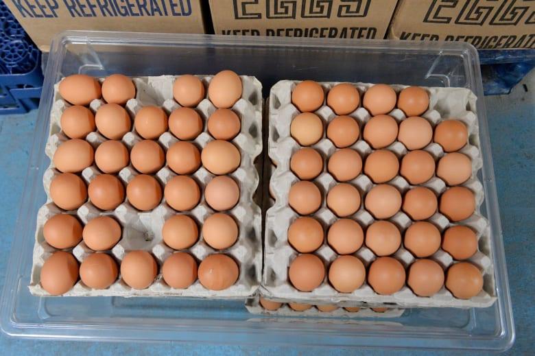 صورة أرشيفية لأطباق بيض