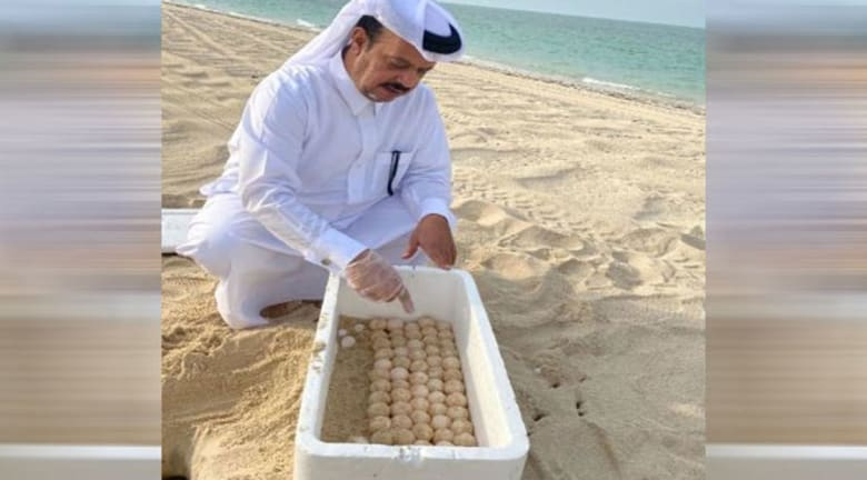 صورة أرشيفية نشرتها وزارة البلدية والبيئة القطرية من الجهود المبذولة لحماية السلاحف