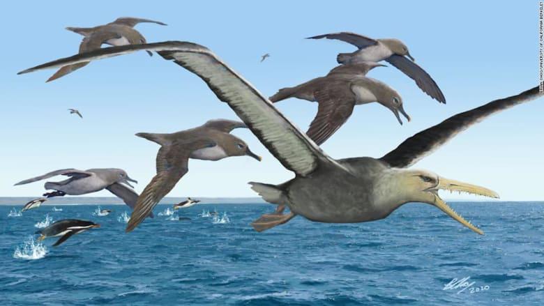 دراسة: أحفورة بالقطب الجنوبي قد تعود لأكبر طائر على الإطلاق