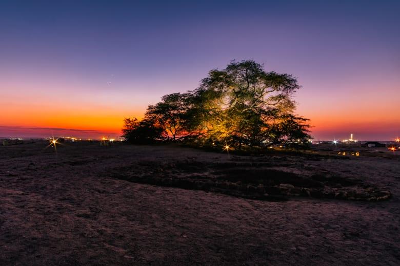 لغر يحير زائريها.. شجرة تقف وحيدة وسط صحراء البحرين منذ أكثر من قرن