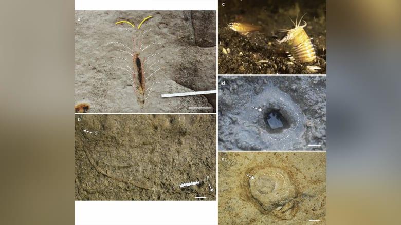 من عصور ما قبل التاريخ.. علماء يعتقدون أنهم وجدوا مخبأ دودة عملاقة مفترسة تربصت بقاع المحيط