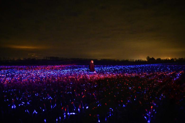 أضواء متوهجة فوق حقل شاسع يحيطه الظلام في هولندا.. ما سرها؟