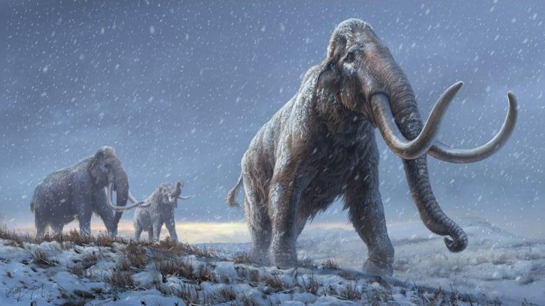 الكشف عن أقدم تسلسل حمض نووي في العالم مأخوذ من ماموث عاش منذ أكثر من مليون سنة