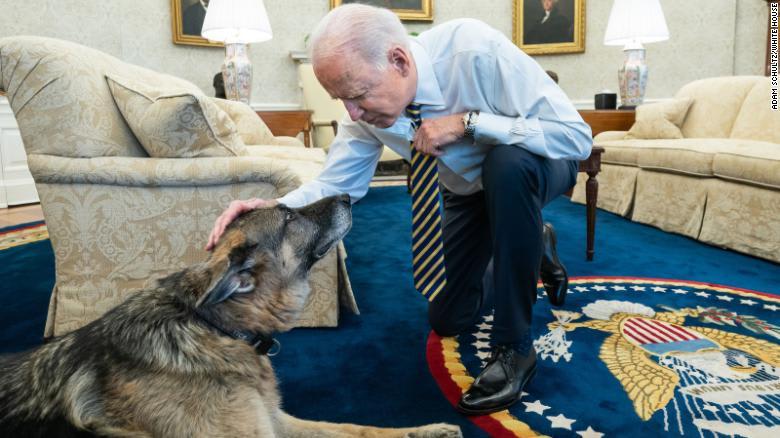 الرئيس جو بايدن يداعب بطل كلب عائلة بايدن في المكتب البيضاوي بالبيت الأبيض،  24 فبراير 2021.