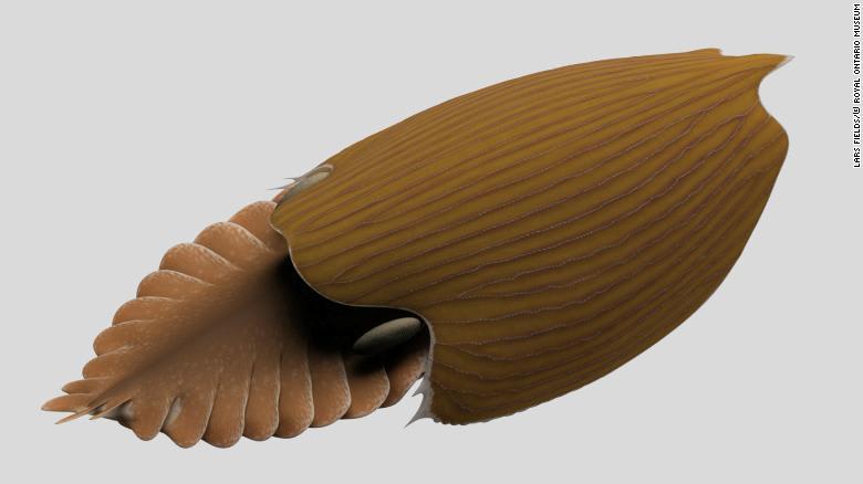 ما سر هذا المخلوق العملاق الذي عاش بمحيطاتنا قبل 500 مليون سنة؟