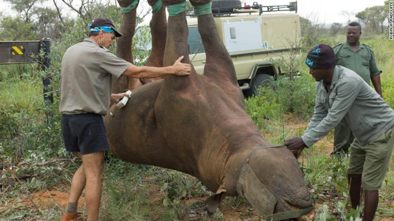 """تجربة """"وحيد القرن المقلوب"""" تفوز بجائزة """"إغ نوبل الساخرة"""""""