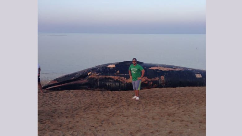 شاب يعثر على حوت نافق على شاطئ بالكويت