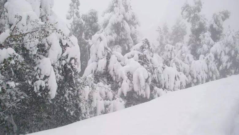 بالصور.. الثلوج تحوّل براري غرب تونس وشرق الجزائر إلى رداء أبيض