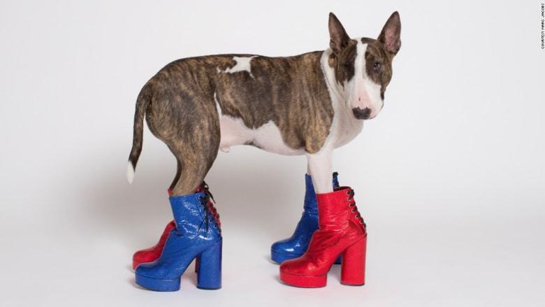 شاهدوا أكثر الكلاب أناقة في العالم!