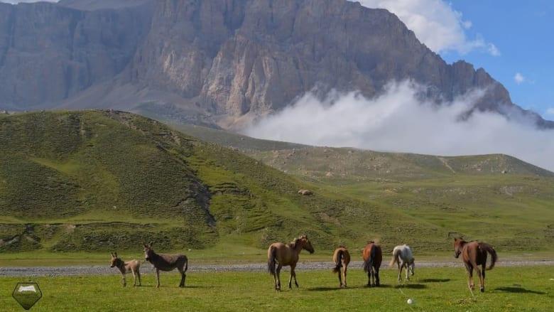 أحصنةٌ في جبل شهداغ خلال فصل الصيف.