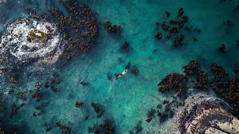 """كتاب """"تغير البحر: السعادة البدائية وفن التتبع تحت الماء"""""""