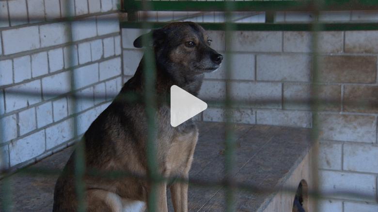 بعضها لجأ إلى أوروبا .. كلاب دونتسك .. قصتها تلخص مأساة المدينة