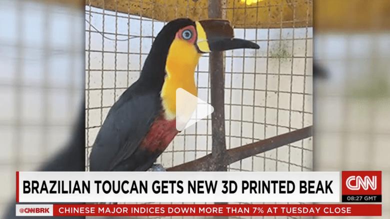 شاهد.. كيف أنقذت الطباعة ثلاثية الأبعاد حياة هذا الطائر