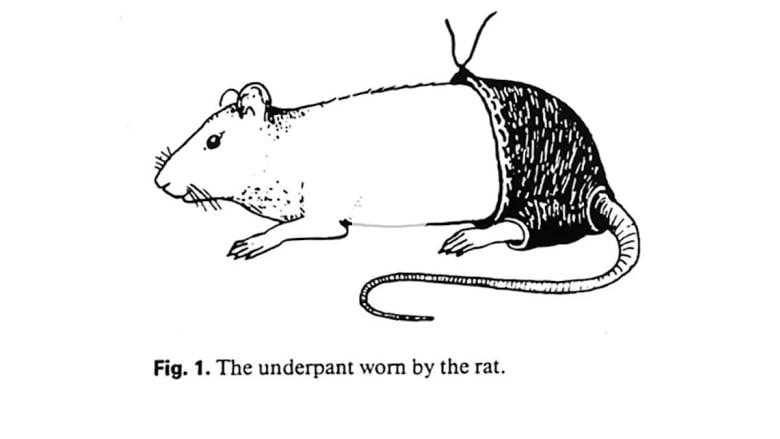 """مصري يفوز بجائزة """"نوبل للحماقة العلمية"""" لإلباسه الفئران سراويل"""