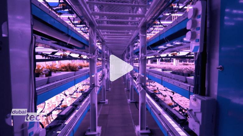 """داخل """"المزارع الرأسية"""" التي ستغير صناعة الغذاء في دبي"""