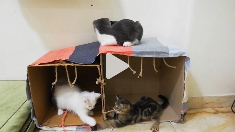 جولة داخل أول فندق دمشقي للقطط في سوريا