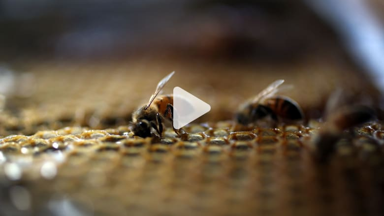 160811143428-honey-bee.jpg