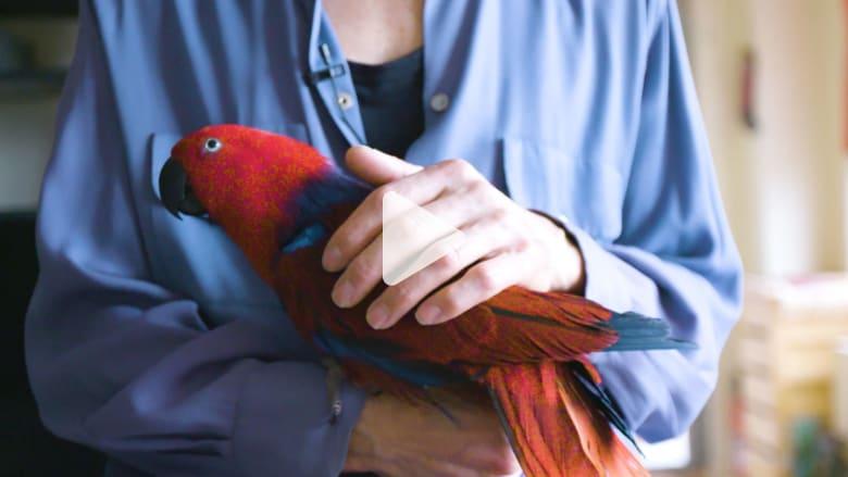 """يستطيع """"هامس الببغاوات"""" هذا حل مشاكل طيورك"""