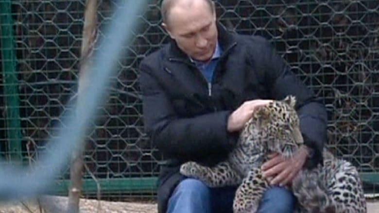 بوتين يلاعب نمرا لطمأنة ضيوف سوتشي