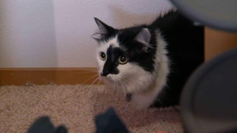 الشرطة تقبض على قطة بسبب عراكها مع عائلة