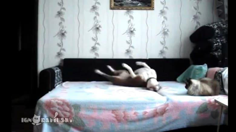 كاميرا تفضح أفعال الكلب بعد مغادرة أصحابه للمنزل