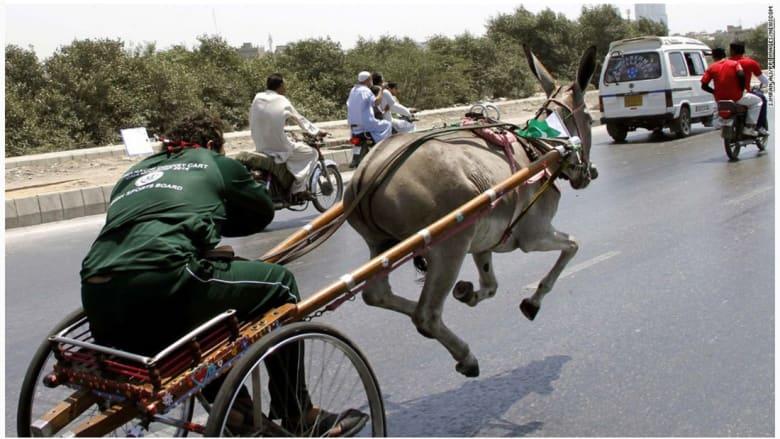 عربة حمار للسباق في ماراتشي الباكستانية.