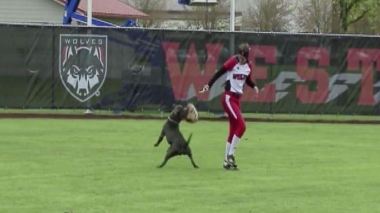 كلب يقتحم فجأة ملعباً خلال مباراة للبيسبول.. ماذا حدث؟