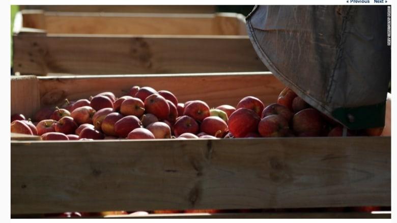 حافط التفاح على مرتبه الأولى لكونه الأكثر تلوثا للسنة الرابعة على التوالي.