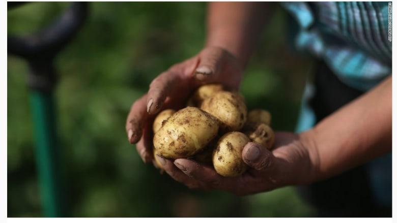 12. البطاطا